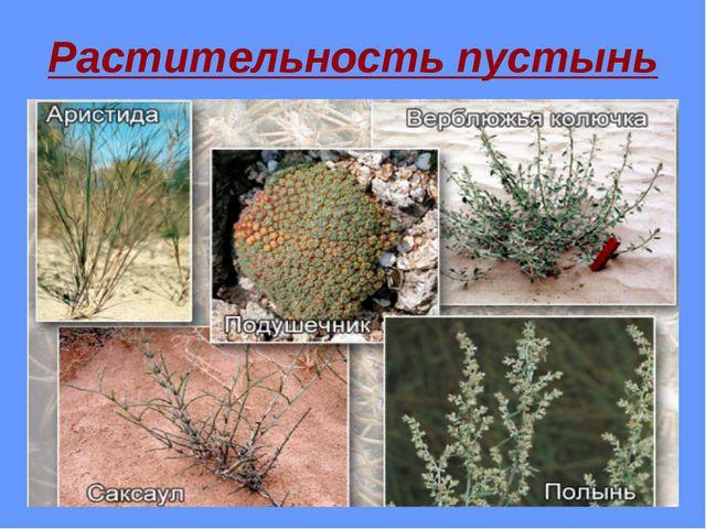 Растительность пустынь