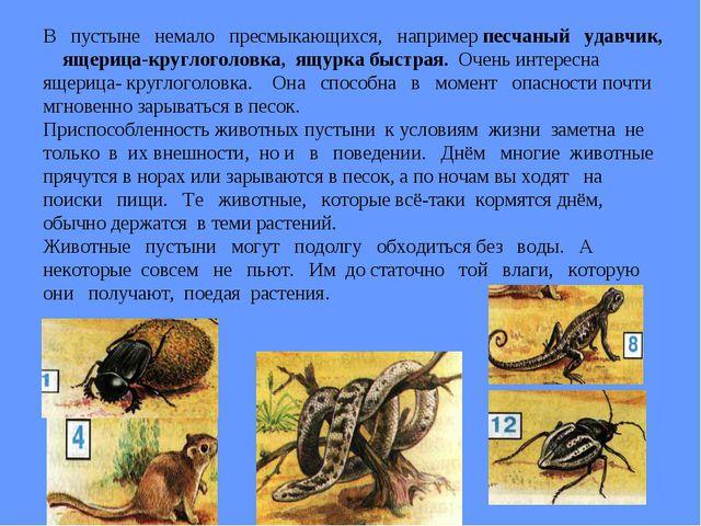 В пустыне немало пресмыкающихся, например песчаный удавчик, ящерица-круглогол...