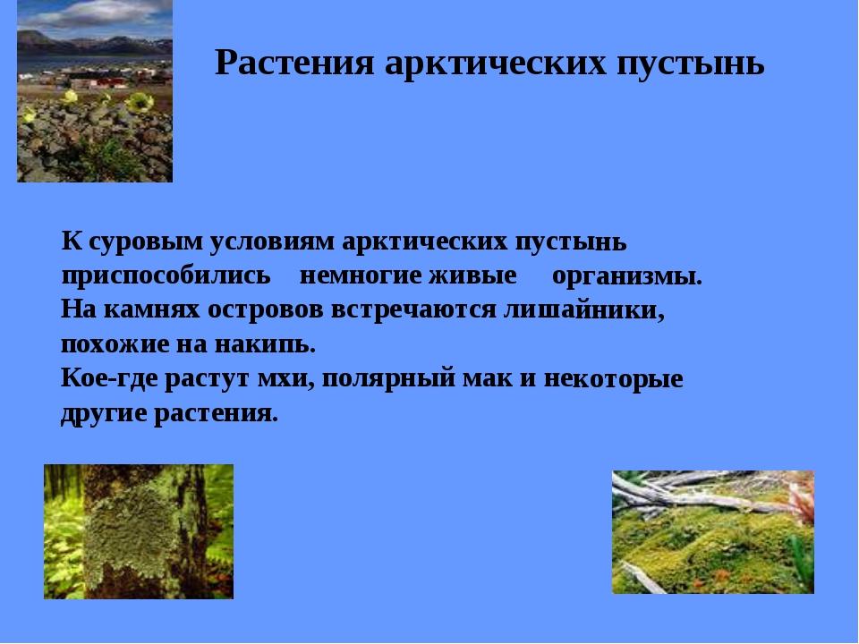 Растения арктических пустынь К суровым условиям арктических пустынь приспособ...