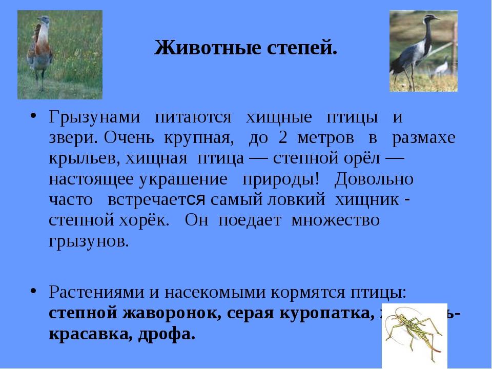 Животные степей. Грызунами питаются хищные птицы и звери. Очень крупная, до 2...