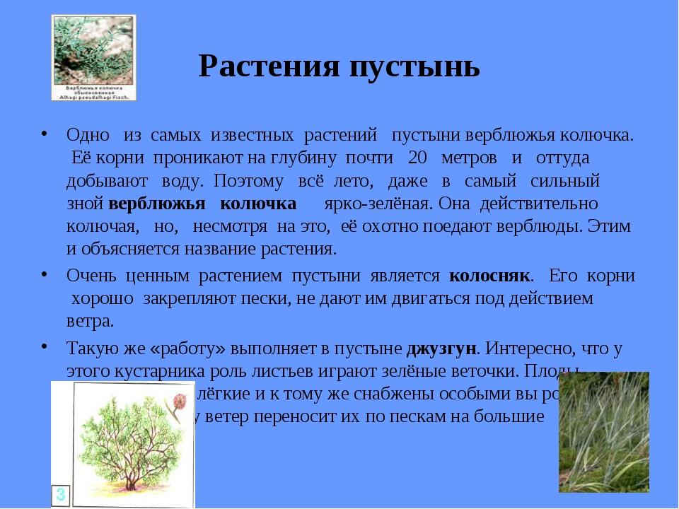 Растения пустынь Одно из самых известных растений пустыни верблюжья колючка....