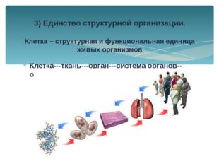 Клетка---ткань---орган---система органов--организм 3) Единство структурной ор