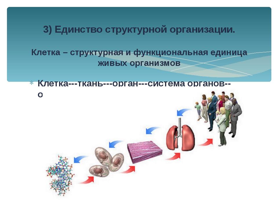 Клетка---ткань---орган---система органов--организм 3) Единство структурной ор...