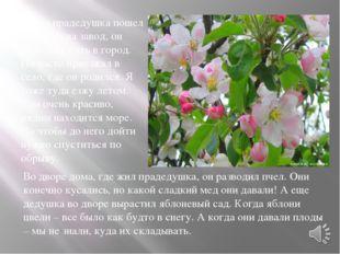 Мой прадедушка уже умер. Похоронен он на Николаевском кладбище на аллее почет