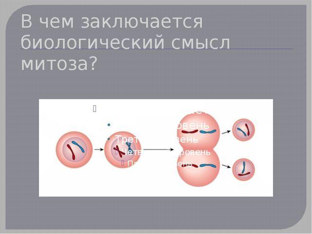 В чем заключается биологический смысл митоза?