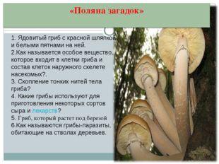 1. Ядовитый гриб с красной шляпкой и белыми пятнами на ней. 2.Как называется