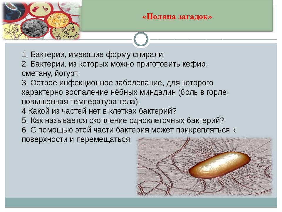 1. Бактерии, имеющие форму спирали. 2. Бактерии, из которых можно приготовить...