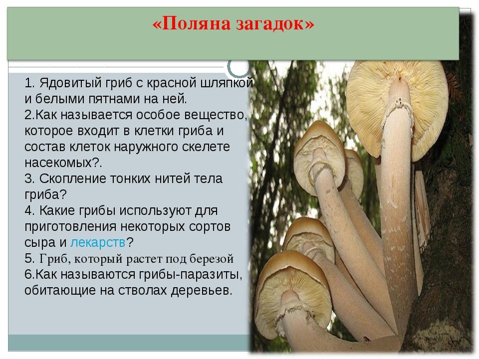 1. Ядовитый гриб с красной шляпкой и белыми пятнами на ней. 2.Как называется...