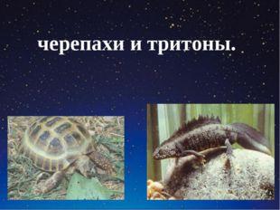 черепахи и тритоны.