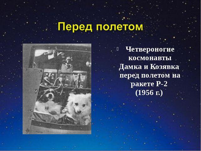 Четвероногие космонавты Дамка и Козявка перед полетом на ракете Р-2 (1956 г.)