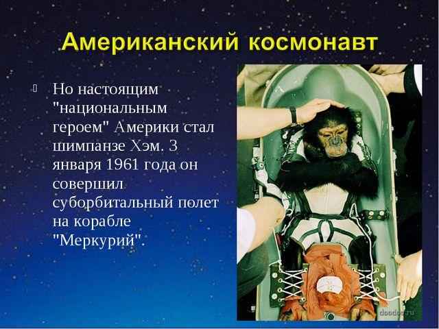 """Но настоящим """"национальным героем"""" Америки стал шимпанзе Хэм. 3 января 1961 г..."""