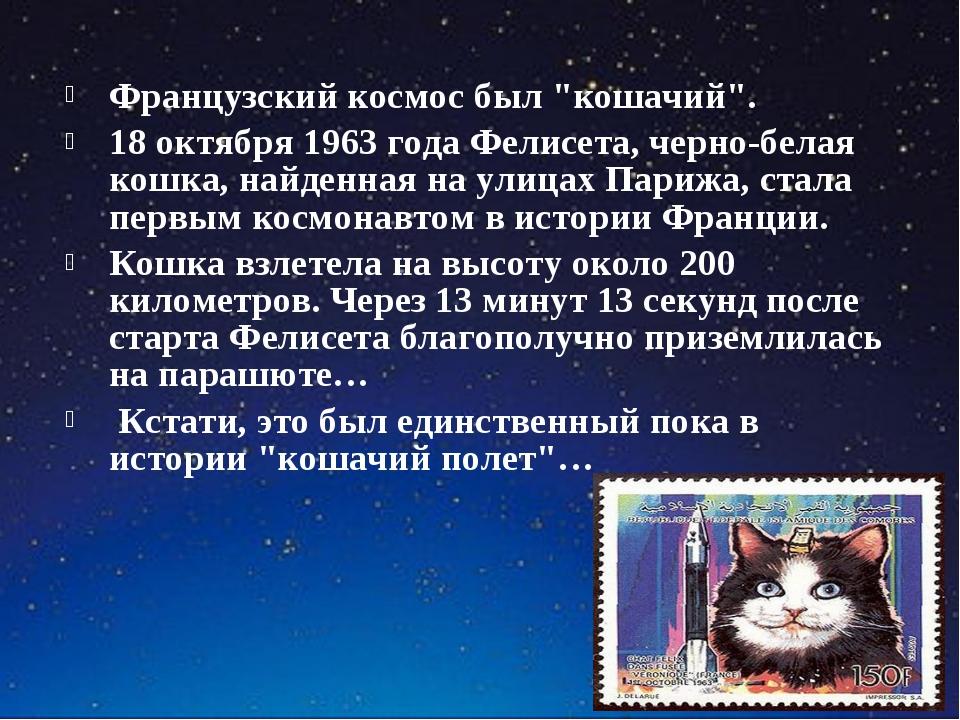 """Французский космос был """"кошачий"""". 18 октября 1963 года Фелисета, черно-белая..."""