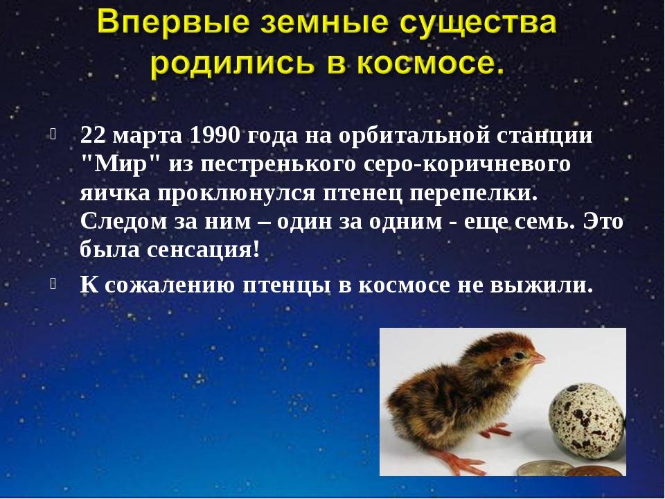 """22 марта 1990 года на орбитальной станции """"Мир"""" из пестренького серо-коричнев..."""