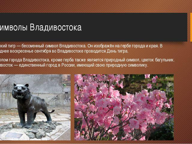 2.Символы Владивостока Амурский тигр — бессменный символ Владивостока. Он из...