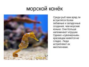 морской конёк Среди рыб вам вряд ли встретятся более забавные и загадочные со