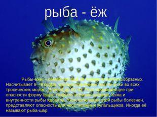 Рыбы-ежи— семейство рыб из отряда иглобрюхообразных. Насчитывает 6—8 родов,