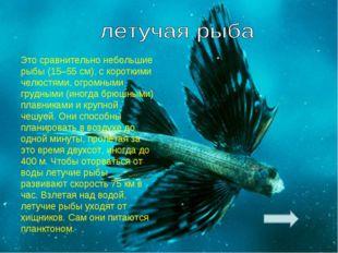 Это сравнительно небольшие рыбы (15–55 см), с короткими челюстями, огромными
