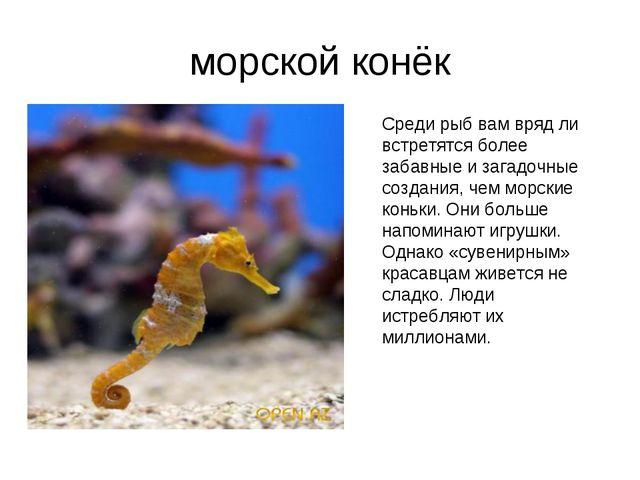 морской конёк Среди рыб вам вряд ли встретятся более забавные и загадочные со...