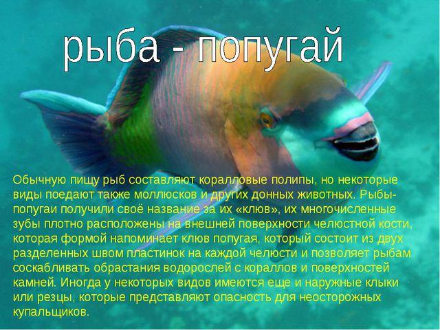 Обычную пищу рыб составляют коралловые полипы, но некоторые виды поедают так...
