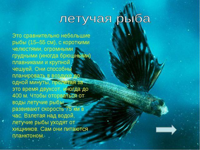 Это сравнительно небольшие рыбы (15–55 см), с короткими челюстями, огромными...