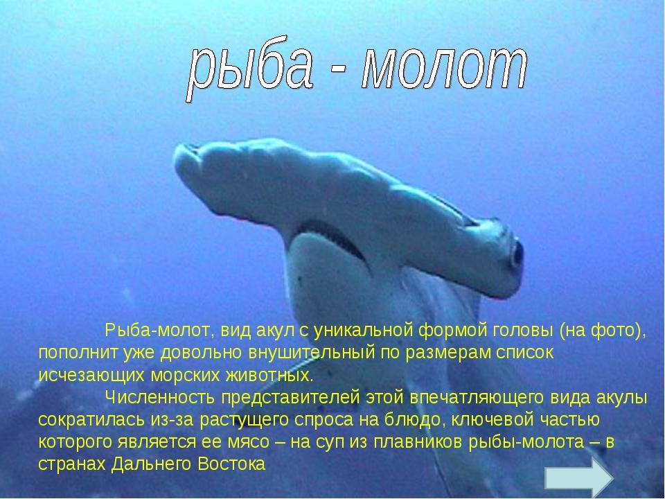 Рыба-молот, вид акул с уникальной формой головы (на фото), пополнит уже дов...