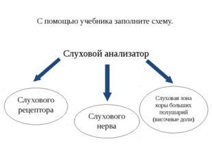 С помощью учебника заполните схему. Слуховой анализатор Слухового рецептора С