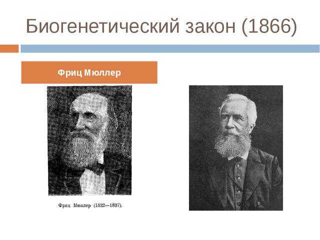 Биогенетический закон (1866) Фриц Мюллер Эрнст Геккель