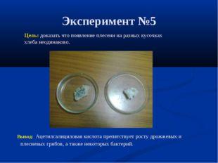 Эксперимент №5 Цель: доказать что появление плесени на разных кусочках хлеба