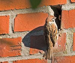 http://upload.wikimedia.org/wikipedia/commons/thumb/3/30/J-Birds4.jpg/250px-J-Birds4.jpg