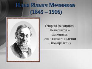 Илья Ильич Мечников (1845 – 1916) Открыл фагоцитоз. Лейкоциты – фагоциты, что