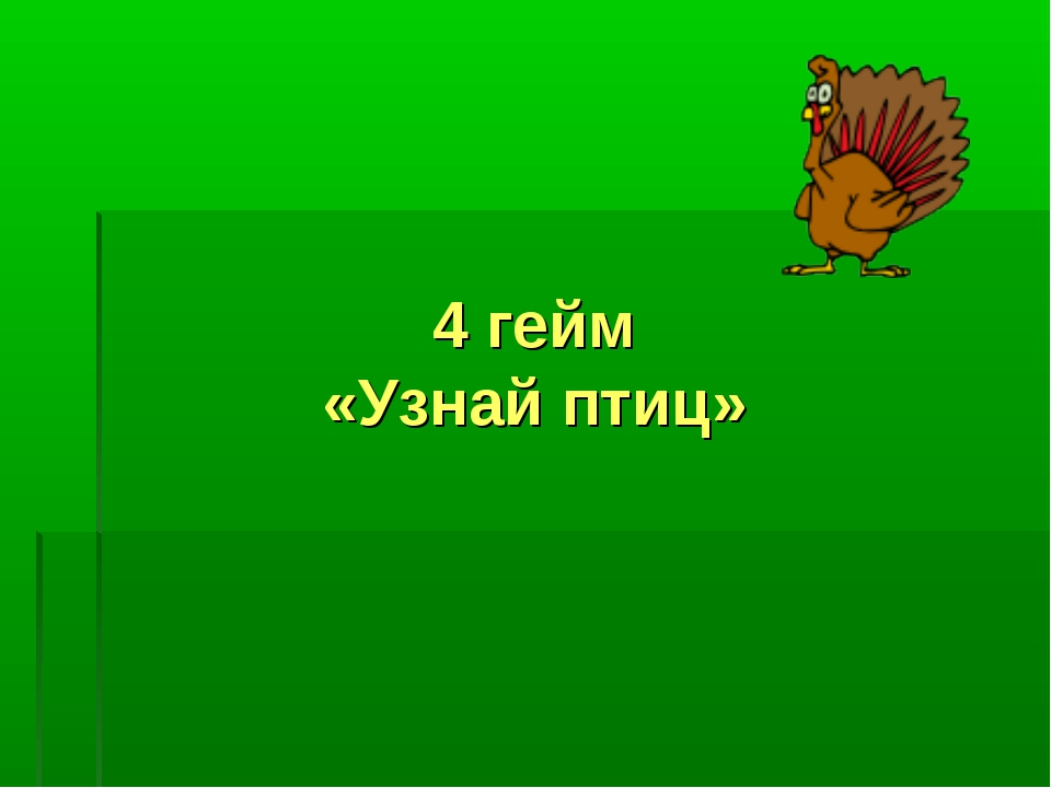 4 гейм «Узнай птиц»