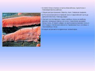 В ХМАО-Югре отмечен в Ханты-Мансийском, Сургутском и Нижневартовском районах.