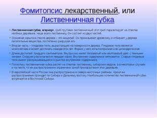 Фомитопсис лекарственный, илиЛиственничная губка Лиственничная губка,агари
