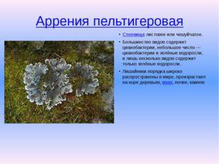Аррения пельтигеровая Слоевищелистовое или чешуйчатое. Большинство видов со