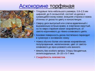Аскокорине торфяная Плодовые тела небольшого размера, 0,6–2,5 мм шириной, до