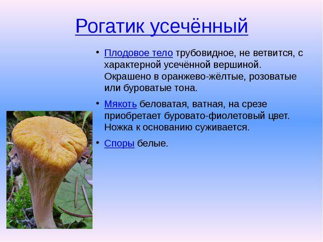 Рогатик усечённый Плодовое телотрубовидное, не ветвится, с характерной усечё...