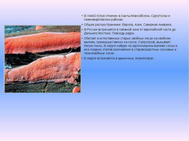 В ХМАО-Югре отмечен в Ханты-Мансийском, Сургутском и Нижневартовском районах....