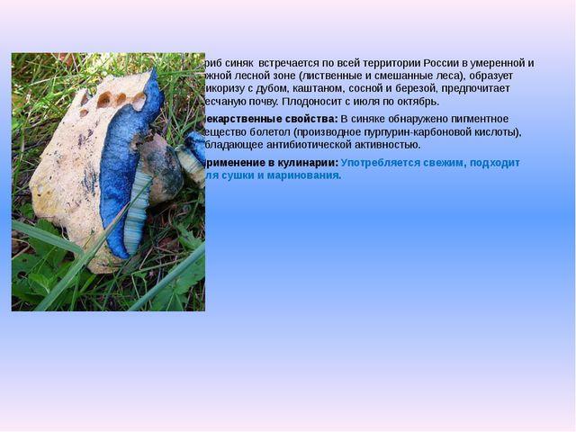 Гриб синяквстречается по всей территории России в умеренной и южной лесной...