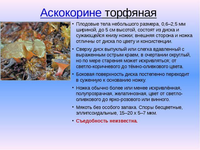 Аскокорине торфяная Плодовые тела небольшого размера, 0,6–2,5 мм шириной, до...