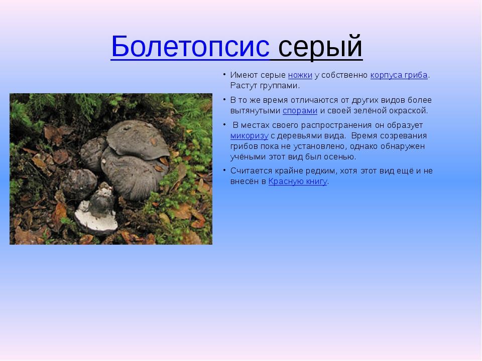 Болетопсис серый Имеют серыеножкиу собственнокорпуса гриба. Растут группа...