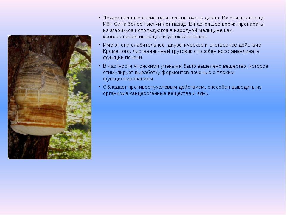 Лекарственные свойства известны очень давно. Их описывал еще Ибн Сина более т...