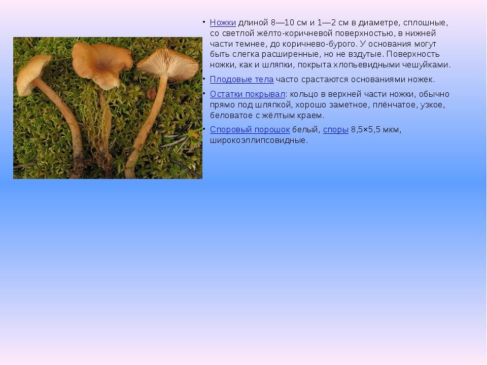 Ножкидлиной 8—10см и 1—2см в диаметре, сплошные, со светлой жёлто-коричнев...