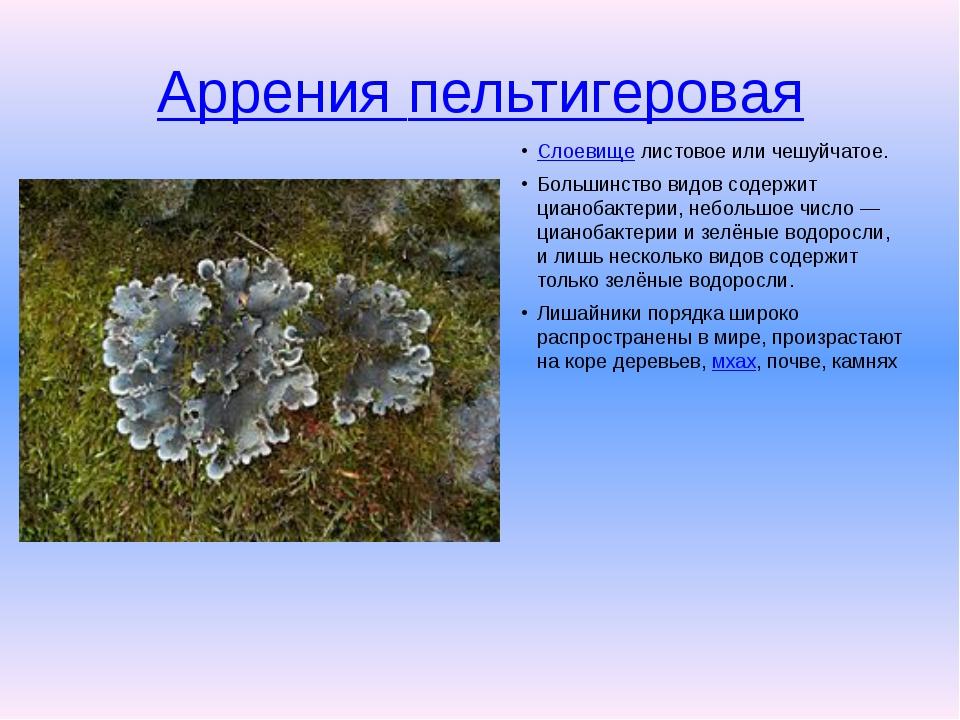 Аррения пельтигеровая Слоевищелистовое или чешуйчатое. Большинство видов со...