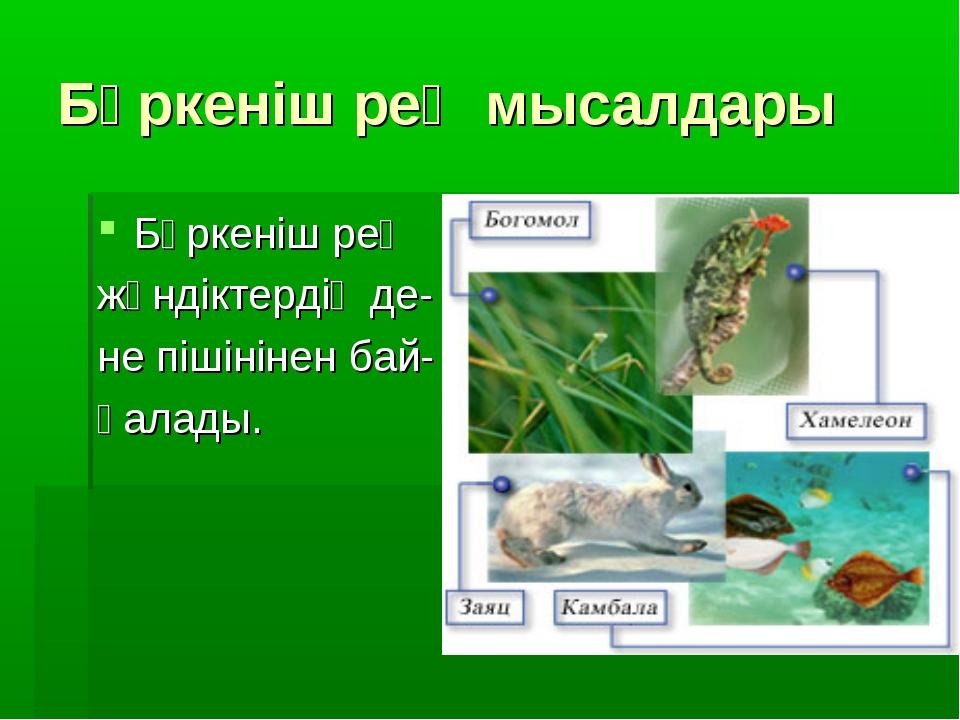 Бүркеніш рең мысалдары Бүркеніш рең жәндіктердің де- не пішінінен бай- қалады.