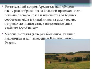 Растительный покров Архангельской области очень разнообразен из-за большой п