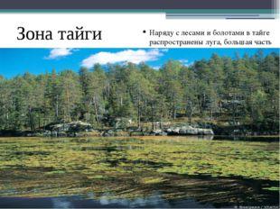 Зона тайги наибольшая по площади природная зона России. Типичные почвы тайги