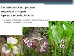 Растительность пресных водоемов и морей Архангельской области в целом не бога