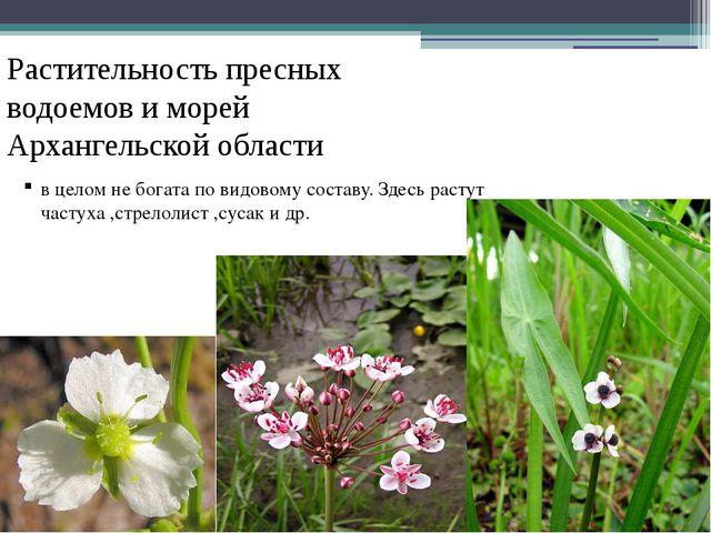 Растительность пресных водоемов и морей Архангельской области в целом не бога...