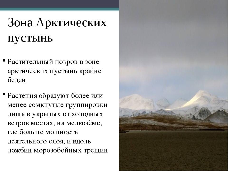 Зона Арктических пустынь Растительный покров в зоне арктических пустынь крайн...