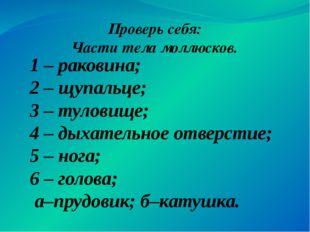 1 – раковина; 2 – щупальце; 3 – туловище; 4 – дыхательное отверстие; 5 – нога